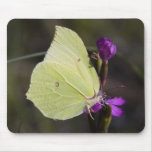 yellow butterfly mouse mats