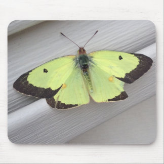 Yellow Butterfly Mouse Pads