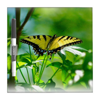 Yellow Butterfly on Dry Erase Board