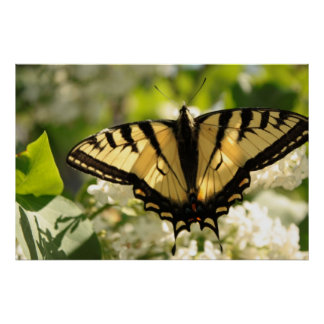 Yellow butterfly on lilac Print