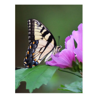 Yellow Butterfly on Pink Posies Postcard