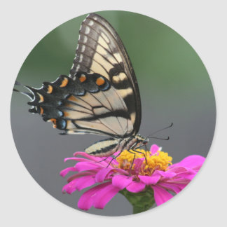 Yellow Butterfly on Pink Zinnia Flower Classic Round Sticker