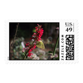 Yellow Butterfly on Red Bloom Postage