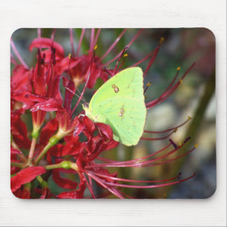 Yellow Butterfly on Red Spider Lily Mouse Pad