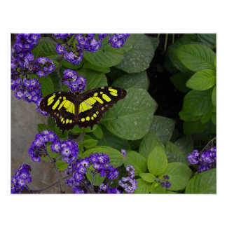 Yellow Butterfly on Violet Flowers Print