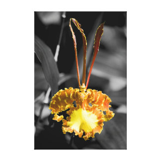 Yellow Butterfly Orchid Gallery Wrapped Canvas