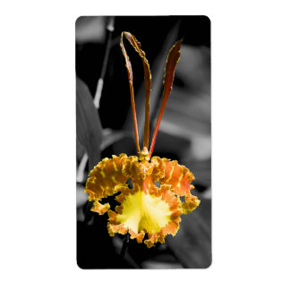 Yellow Butterfly Orchid Label