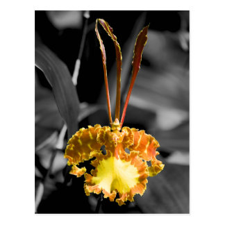Yellow Butterfly Orchid Postcard