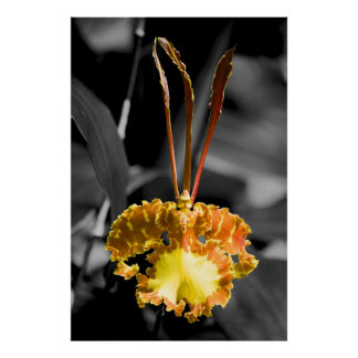 Yellow Butterfly Orchid Poster