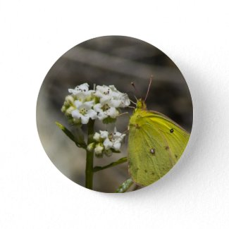 Yellow Butterfly Pinback Buttons