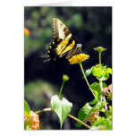 Yellow Butterfly Upclose Cards