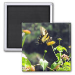 Yellow Butterfly Upclose Fridge Magnets