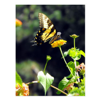 Yellow Butterfly Upclose Postcard