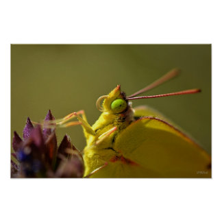 Yellow Butterfly with Green Eyes Posters