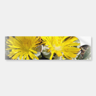 Yellow Cactus Blooming Flowers Bumper Sticker