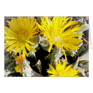Yellow Cactus Blooming Flowers Card
