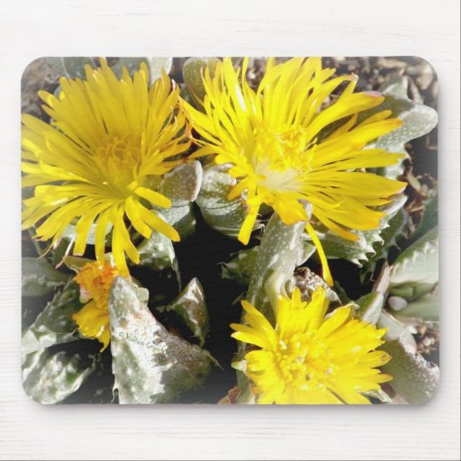 Yellow Cactus Blooming Flowers Mousepad