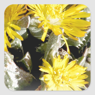 Yellow Cactus Blooming Flowers Square Sticker