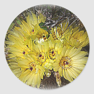Yellow Cactus Blooms Classic Round Sticker
