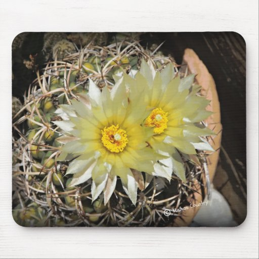 Yellow Cactus Blooms Mouse Pad