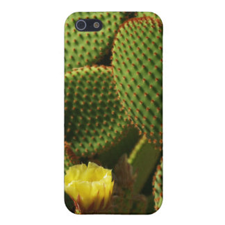 Yellow Cactus Cover