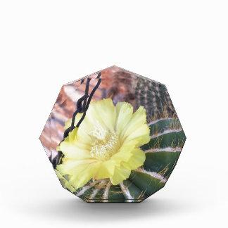Yellow cactus flower acrylic award