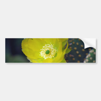 Yellow cactus flower and meaning bumper sticker