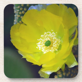 Yellow cactus flower and meaning drink coaster