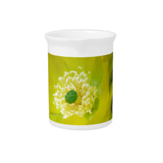 Yellow cactus flower and meaning pitcher