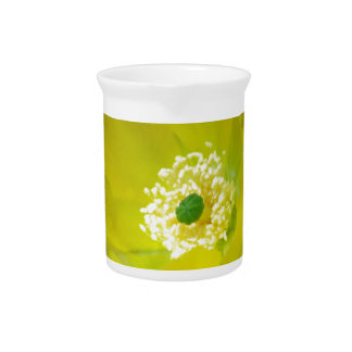 Yellow cactus flower and meaning drink pitchers