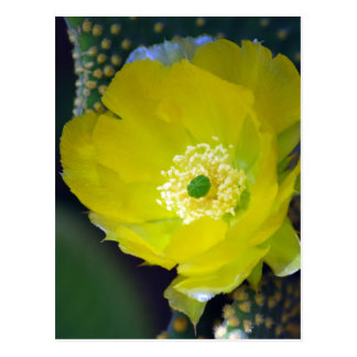 Yellow cactus flower and meaning postcard