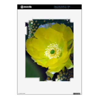 Yellow cactus flower and meaning skins for the iPad 2