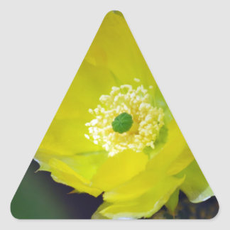Yellow cactus flower and meaning triangle sticker