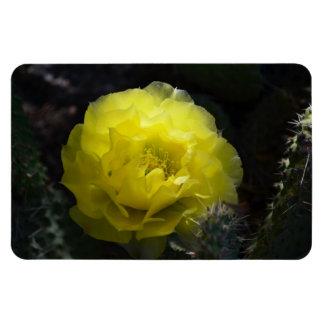 Yellow Cactus Flower in the Dark magnet
