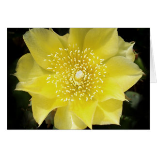 Yellow Cactus Prickly Pear Flower Card