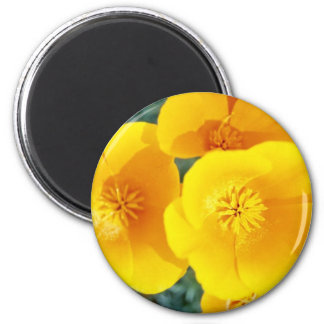 yellow California poppies in full bloom flowers 2 Inch Round Magnet