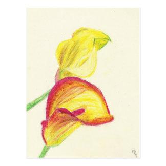 Yellow Calla Lilies Postcard