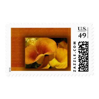 Yellow calla lily postage