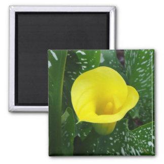 Yellow Calla Magnet