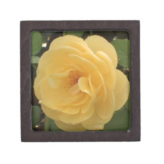 Yellow Camellia Premium Gift Box