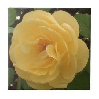 Yellow Camellia Tile