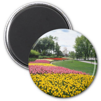 yellow Canadian Tulip Festival, Dow's Lake, Ottawa Fridge Magnets