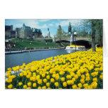yellow Canadian Tulip Festival, Rideau Canal, Otta Greeting Card