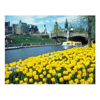 yellow Canadian Tulip Festival, Rideau Canal, Otta Postcard