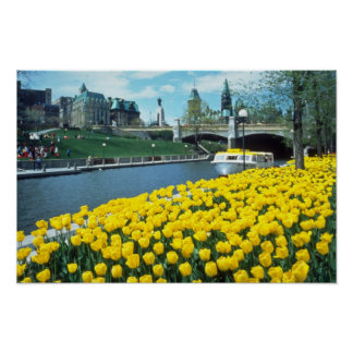 yellow Canadian Tulip Festival, Rideau Canal, Otta Poster