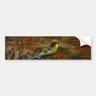 Yellow Canary bird bathing Bumper Sticker