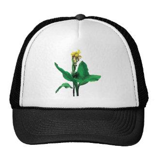 Yellow Canna Hats