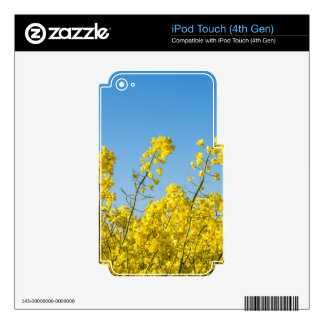 Yellow canola on a field with blue sky iPod touch 4G skins