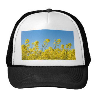 Yellow canola on a field with blue sky trucker hat