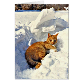 Yellow Cat Makes a Snowball Card